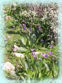 Cretan Flowers
