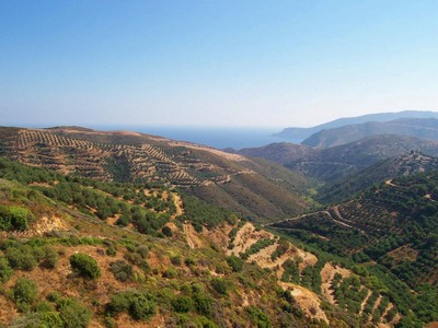 Olive grove on Cretan hillside