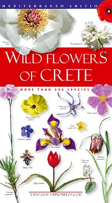 Flowers of crete are amazing plants herbs cretan flowers grow abundantly - Flowers native to greece a sea of color ...