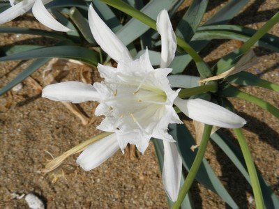 Flora: beautiful white flower