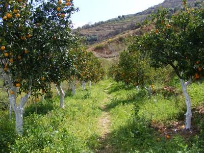 December in Crete